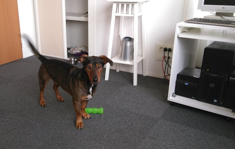 Mako, chien & commercial d'Adania !